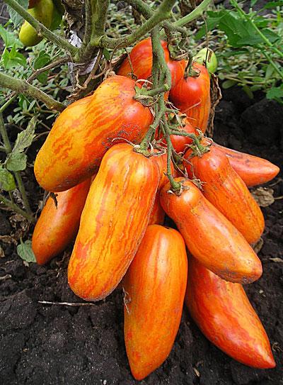 как посадить грейпфрут в домашних условиях из косточки